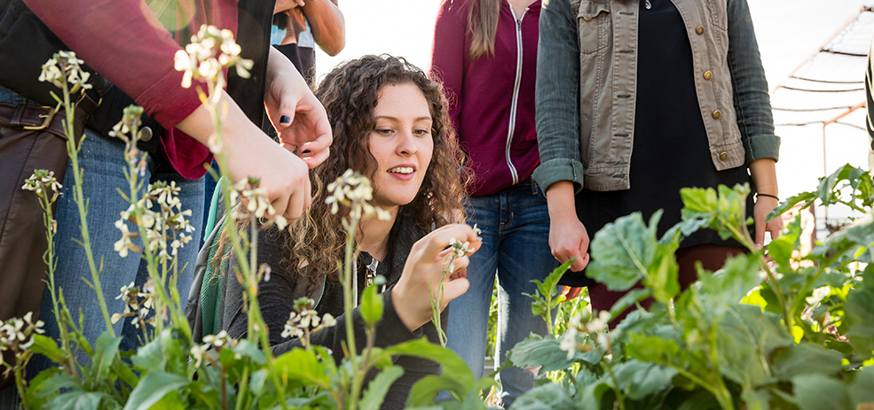 WPC students on rooftop garden