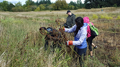 Warner Pacific CDS invasive species clean up